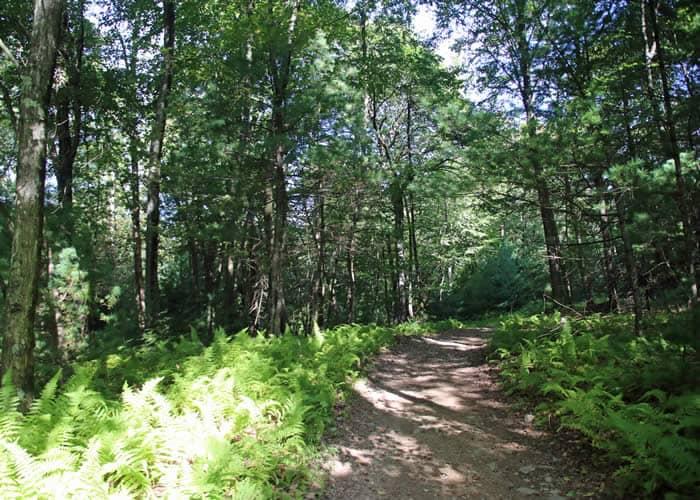 Big Woods Natural Area
