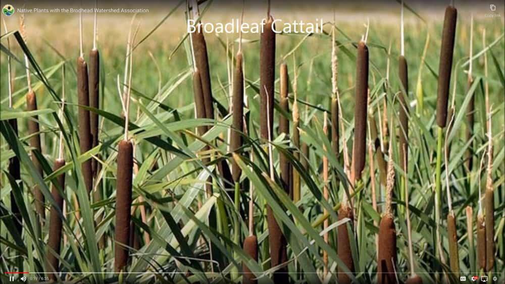 Native Plant video